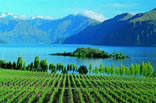 Wanaka and Queenstown Wine Trails